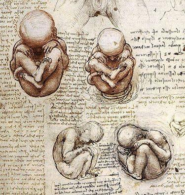 Bebê no útero por Leonardo da Vinci